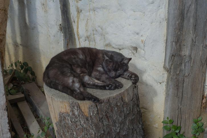 Фото №1 - В Австралии ввели «комендантский час» для котов