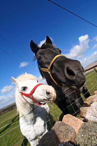 Фото №9 - Звериная страсть: на каких животных похожи звездные пары