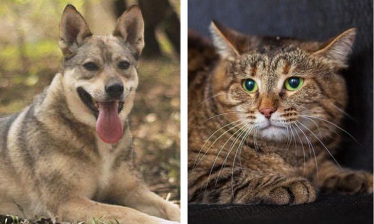 Фото №1 - Котопес недели: собака Лакки и кошка Леонора