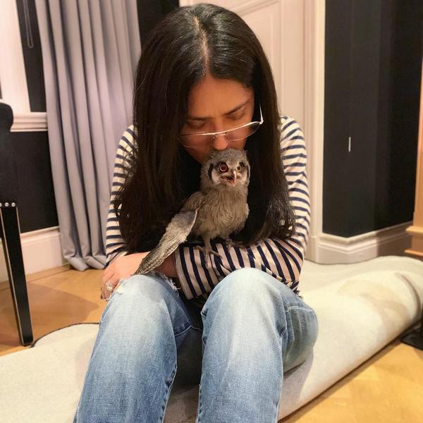 Фото №1 - Причуды звезд: Сальма Хайек завела дома живую сову