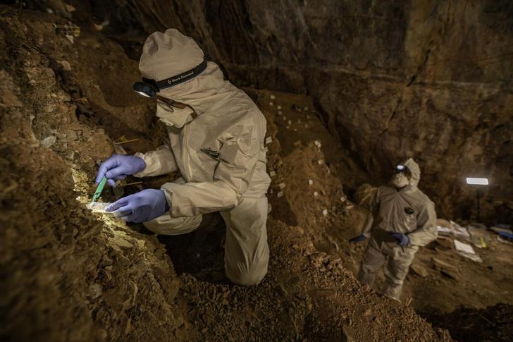 Фото №1 - Древняя ДНК впервые секвенирована из почвы
