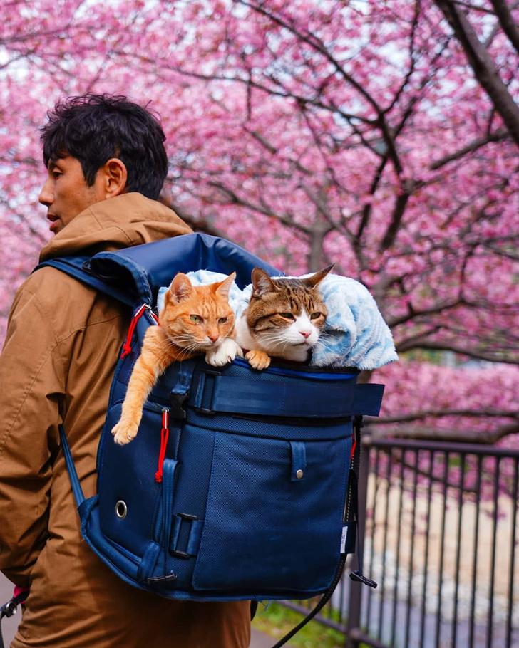 Фото №11 - Замурчательные компаньоны: коты-путешественники