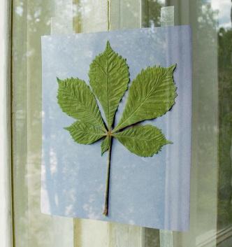 Фото №2 - Картины из листьев и цветов