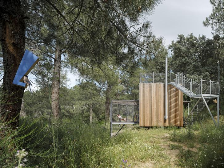 Фото №2 - Микродом в сосновом лесу в Испании