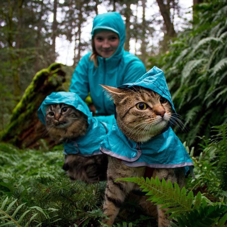 Фото №7 - Замурчательные компаньоны: коты-путешественники