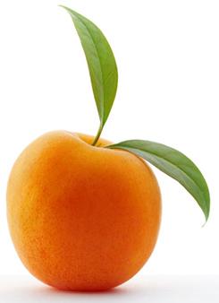На 11 неделе беременности плод можно сравнить с абрикосом