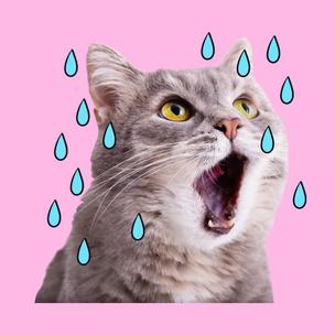 Фото №2 - Тест: Выбери мартовского котика и узнай, сколько человек безответно в тебя влюблены