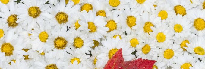 Счастливое озарение: 5 шагов к новым открытиям