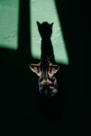 Фото №3 - К чему снятся котята: что говорят сонники и психологи