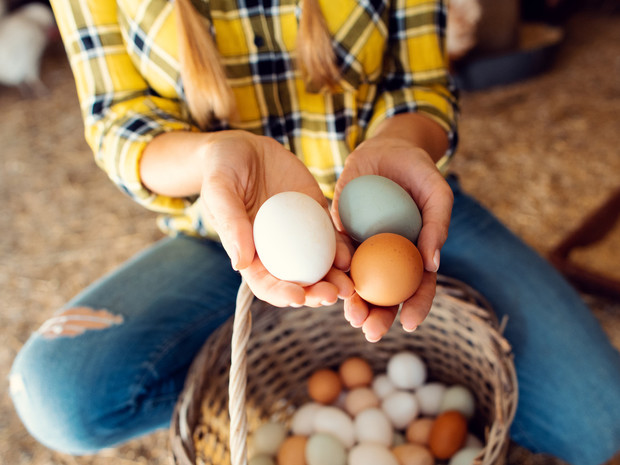 Фото №1 - Что произойдет, если есть по 3 яйца каждый день