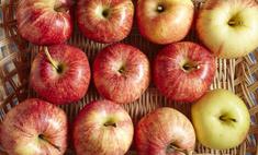 Товары — Осенние яблоки (Бельфлер). Продажа. Санкт-Петербург ... | 142x235