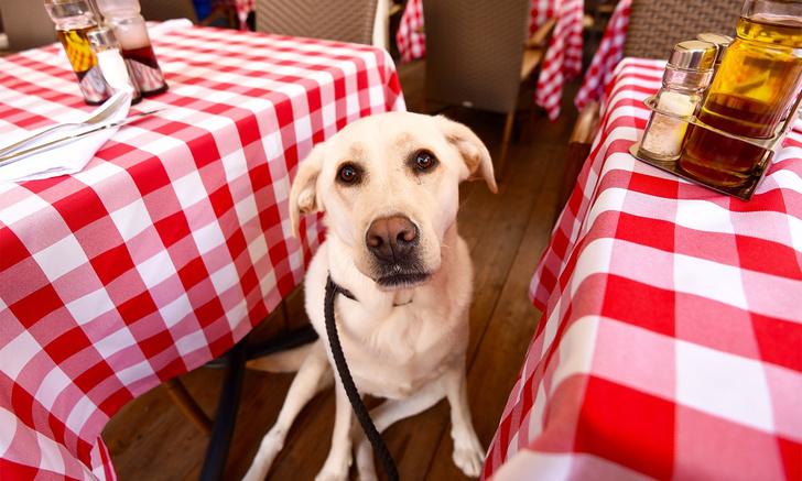 Фото №1 - Как сходить в кафе с собакой, чтобы в твоем счете не было разбитой посуды и покусанных посетителей