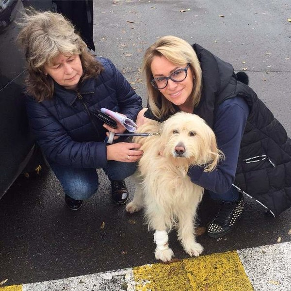 Фото №1 - Гулькина спасла пса, которого бросили умирать на дороге