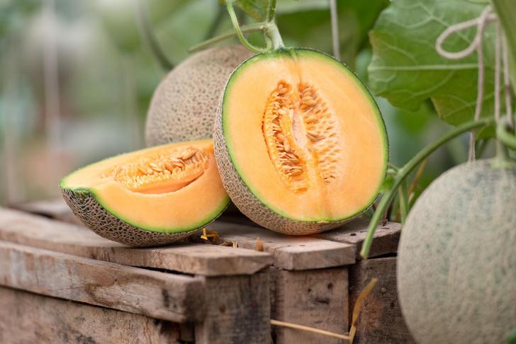 Фото №3 - Тук-тук: как выбрать сладкий арбуз и сочную дыню
