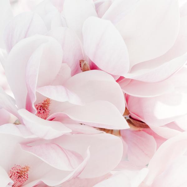 Фото №3 - Узнай, какой ты цветочек по дате рождения