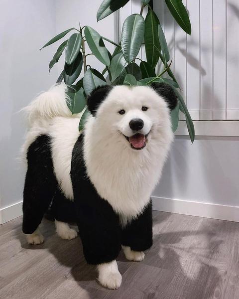 Фото №10 - Самые милые собачки в мире: фото и видео, после которых ты захочешь завести щеночка