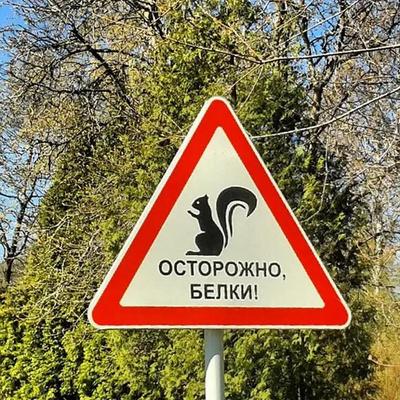 Фото №1 - Тест: Хорошо ли ты знаешь дорожные знаки