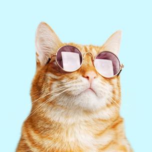 Фото №3 - Тест: Выбери котика, а мы скажем, как ты проведешь выходные