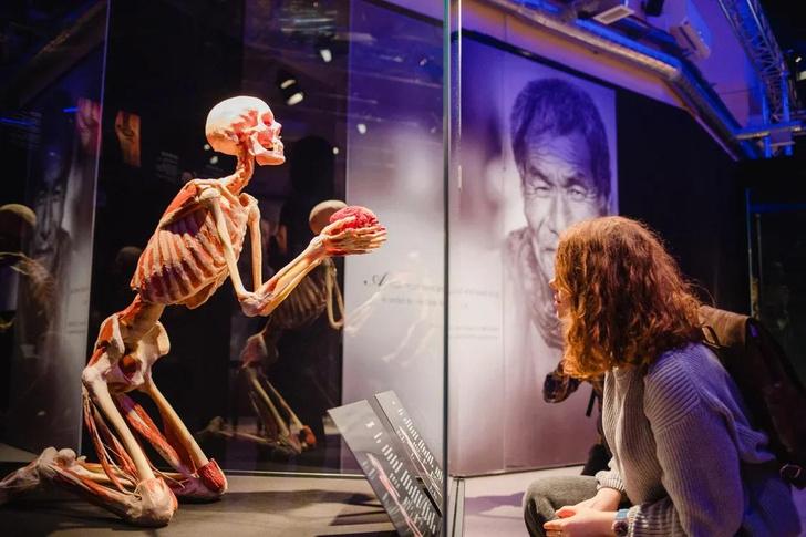 Фото №1 - «Такой анатомии не надо бояться, ее надо знать»: посетители высоко оценили выставку Body Worlds