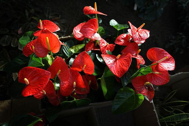 Фото №4 - Комнатные растения, которые помогут пережить сезон простуд