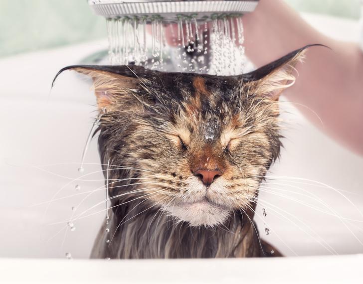 Фото №2 - Жуют уши и пьют воду из душа: необычные привычки питомцев
