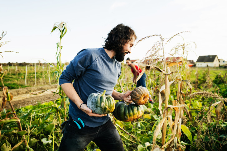 быстро и дешево повысить плодородность почвы