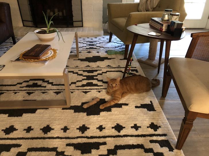 Фото №1 - «Чуть не случился сердечный приступ»: оптическая иллюзия с котом с «отрубленной» лапой