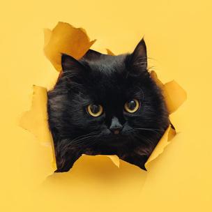 Фото №7 - Тест: Выбери котика, а мы скажем, как ты проведешь выходные