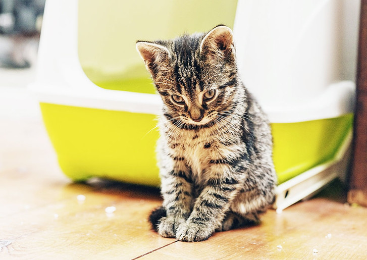 Фото №1 - Кошка заразила человека легочной чумой