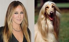 На собак каких пород похожи звезды: 15 забавных пар-двойников